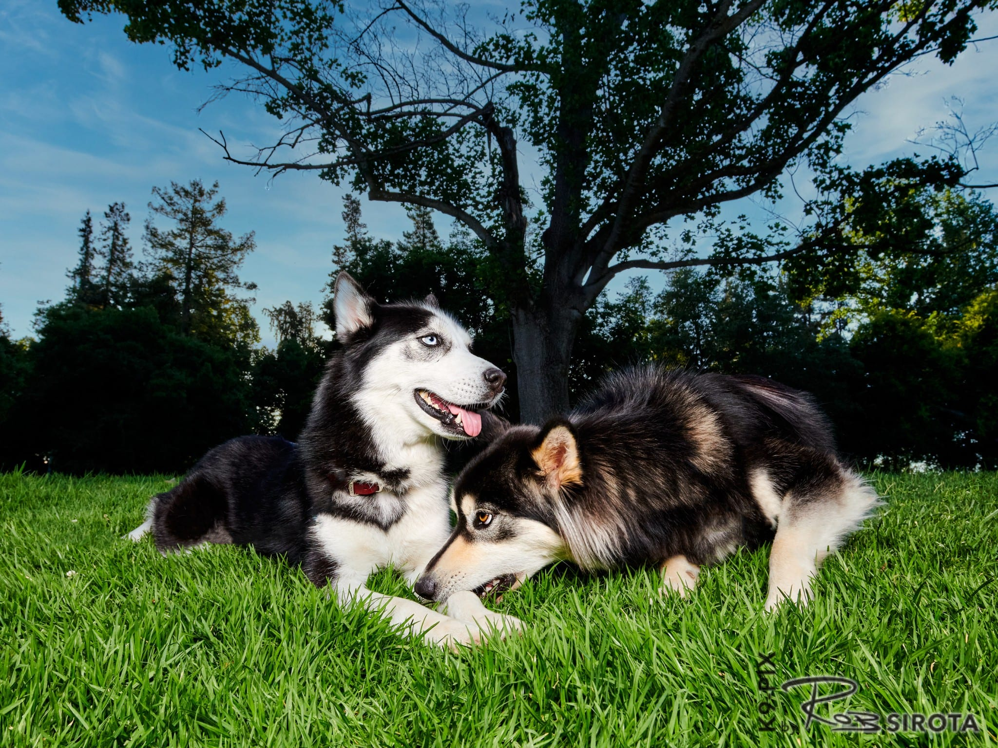 Kiki & Coco